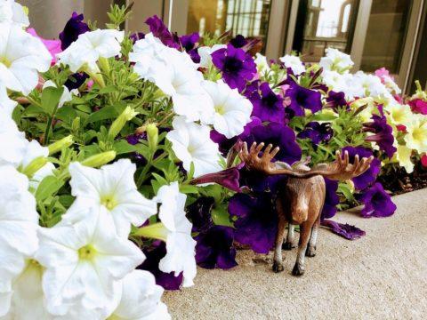 Moose, Flowers, Garden
