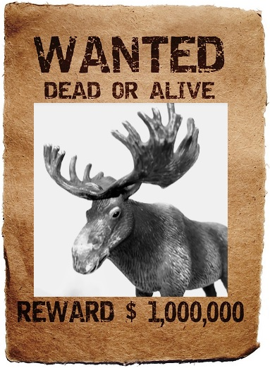 WANTED poster, Dead or Alive